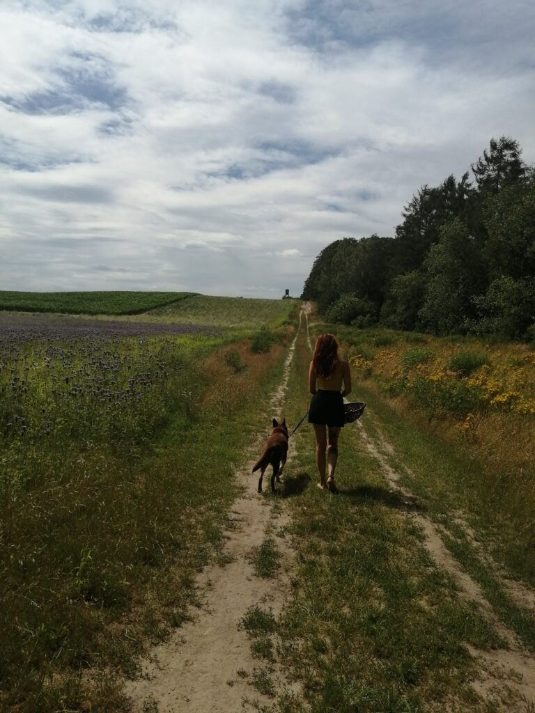 kräuterwanderung, kräutersammeln kräuter sommer